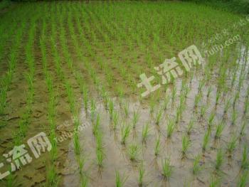 惠州博罗县 20亩 水田 转让