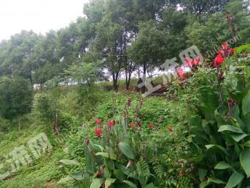 萍乡上栗县 200亩 果园 转让