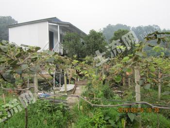 雅安名山区 68亩 果园 转让