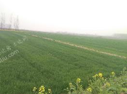 滁州定远县2000亩优质平坦水源有保障水田出租