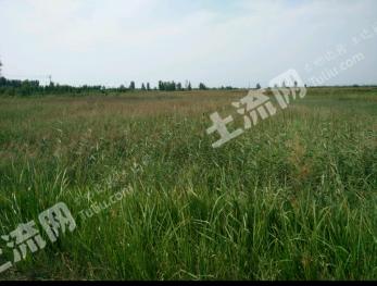 滨州阳信 70亩 荒地 出租