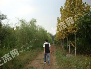 潍坊安丘市 180亩 设施农用地 转让