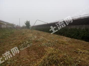 锦州凌海市 3亩 果园 转让