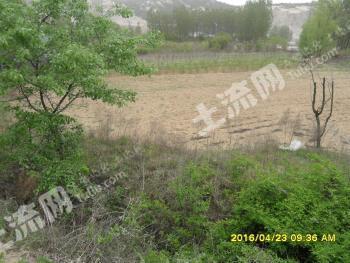 (92)青岛黄岛区 8亩 有林地 转让