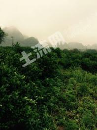 肇庆市封开县60亩优质农业用地(耕地)出租