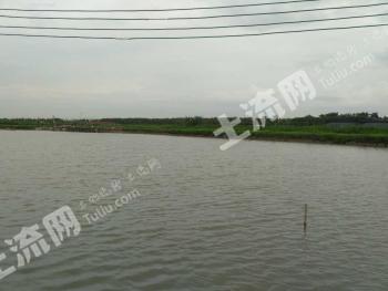 广州番禺区有50亩鱼塘出租适合开农庄和钓鱼场