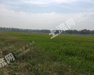 湖南岳阳 800亩 水田 出租