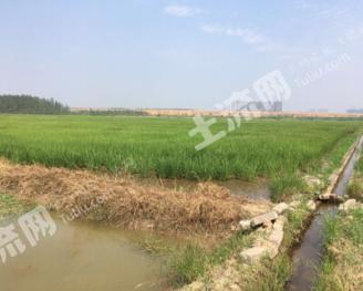 湖南岳阳 1500亩 水田 出租