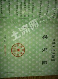洛阳宜阳县 384亩 有林地 转让