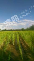 赤峰翁牛特旗263亩水浇地