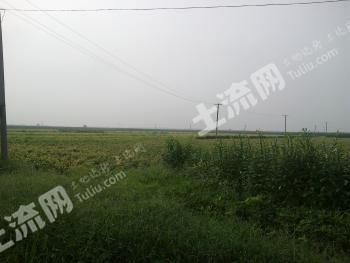 邯郸永年县 60亩 水浇地 转让