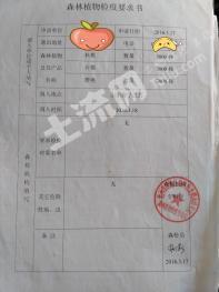 池州Ga15    204亩 果园 出租(入股)