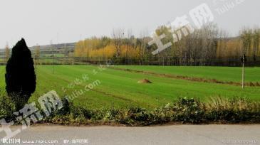 淮安金湖县 500亩 水田 转包