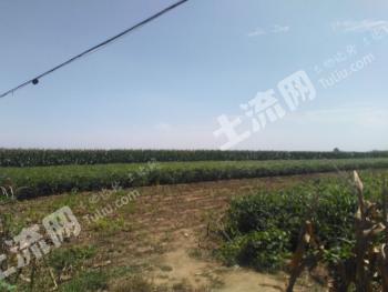 潍坊安丘市 200亩 设施农用地 出租