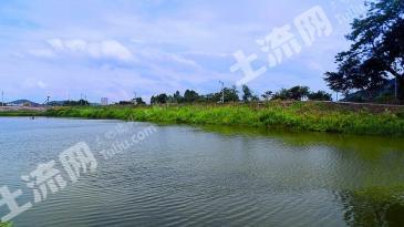 广东东莞 7亩 农场有一口塘和几个猪栏 出租