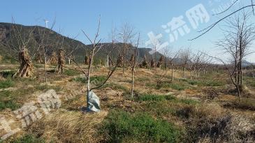 曲靖马龙县 80亩 有林地 转让