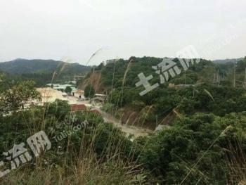 广东广州 150亩 果园 出租