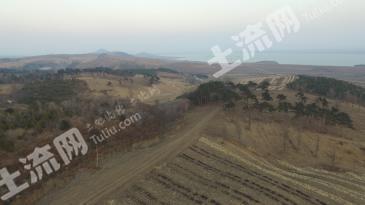 吉林公主岭 800亩 林地诚寻合作伙伴