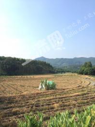 惠州博罗县 4.5亩 工业用地 转让