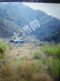 漳州南靖县 976亩 有林地 转让