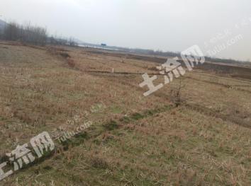 滁州南谯区60亩优质山林地长期出租