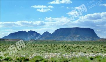 鄂尔多斯鄂托克旗 4500亩 天然牧草地 转让