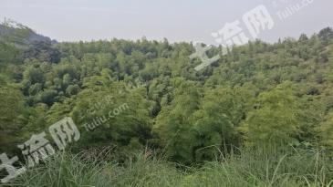 常德汉寿县 379亩 有林地 转让
