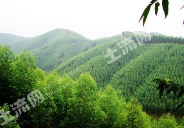 柳州鹿寨县 3000亩 有林地 转让