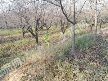 青岛西海岸近郊原生态 33亩 有林山地 转包