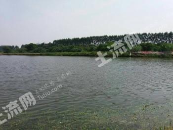 广州市周边100亩鱼塘+农业地
