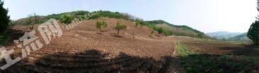 铁岭开原市200亩旱地转让