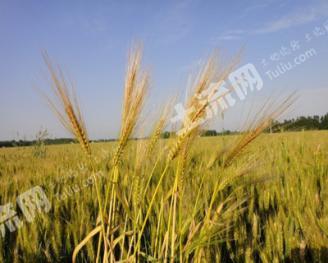 潍坊潍城区51亩旱地转让