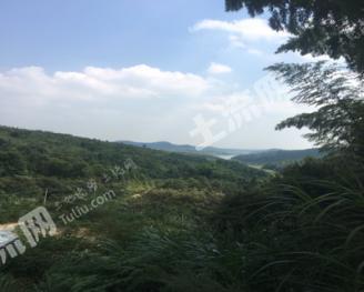抚州临川区1000亩山林地转让
