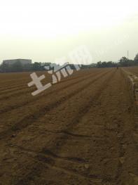 郑州荥阳市120亩水浇地出租(适合小麦玉米)