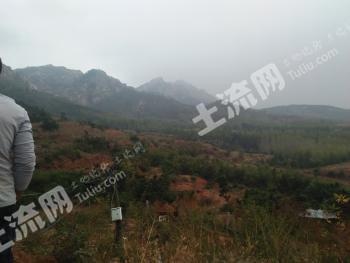 (43)青岛黄岛区 2000亩 荒山 转让