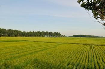 黑龙江国营农场出租土地