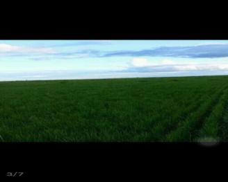 大庆杜尔伯特蒙古族自治县 1000亩 畜牧养殖用地 转让
