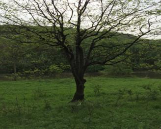 白鹿原300亩生态农场出租转让