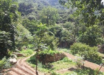 济南长清区 5000亩 其它林地 出租