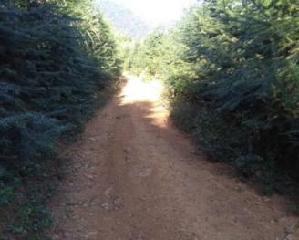 福建漳平市4000亩林地转让
