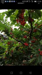 北京海淀区 15亩 果园 出租