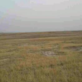 白城通榆县2000亩盐碱地转让