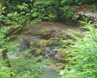四川德阳什邡市1000亩有林地转让