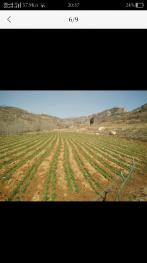 日照五莲县200亩其它耕地转让