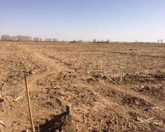 金昌金川区 630亩 水浇地 出租