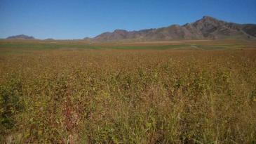 赤峰巴林左旗 257亩 旱地 转包