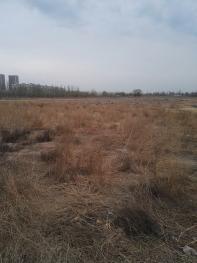 银川兴庆区80亩水浇地转让