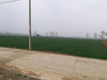 徐州新沂市1000亩水浇地出租