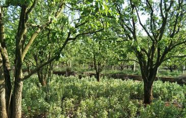 昆明呈贡区 24亩 果园出租
