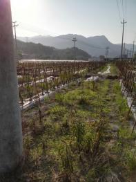 福州连江县10亩果园空地